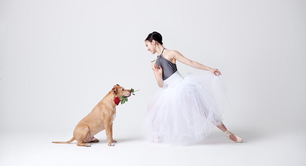 Dancers And Dogs Photography Project